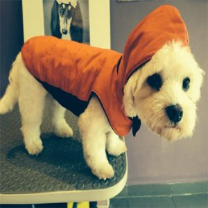 How-to-make-dog-clothes
