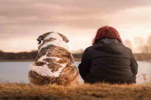 Socialize a Dog with Humans