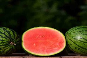 Can dogs eat melon .